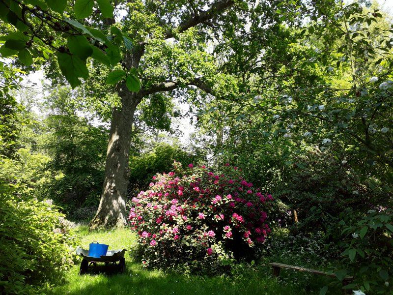 Gartenreise England - Chelsea Flower Show